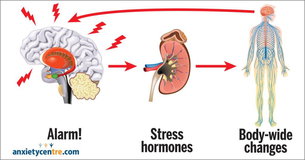 Stress Response Diagram